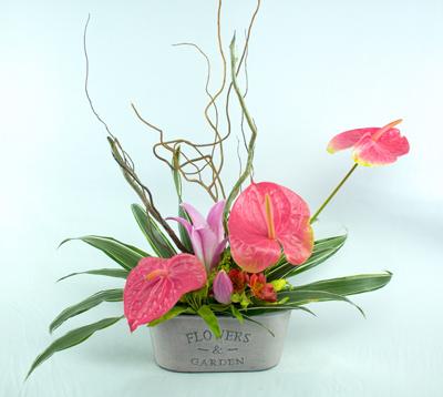 Jardinera flowers con anturios