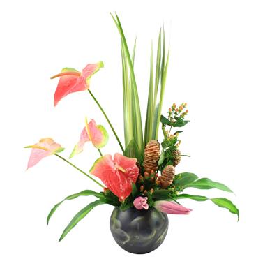 Belleza Tropical