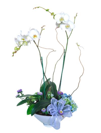 Orquidea en maceta ceramica