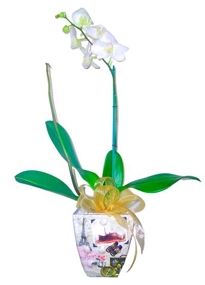 Planta de orquídea Vintage