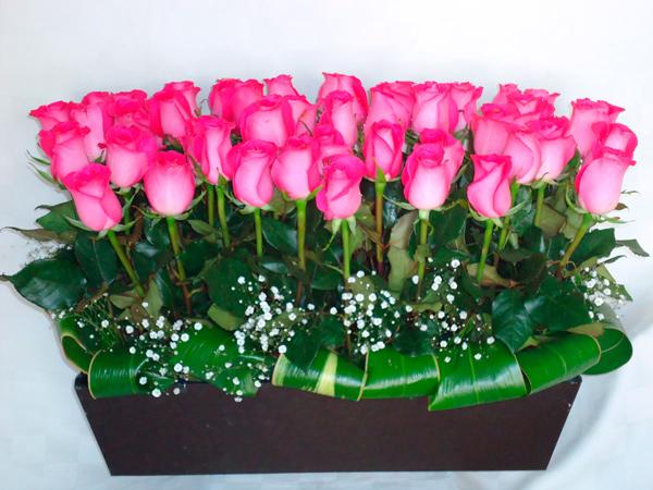 Rosas rosas en jardinera