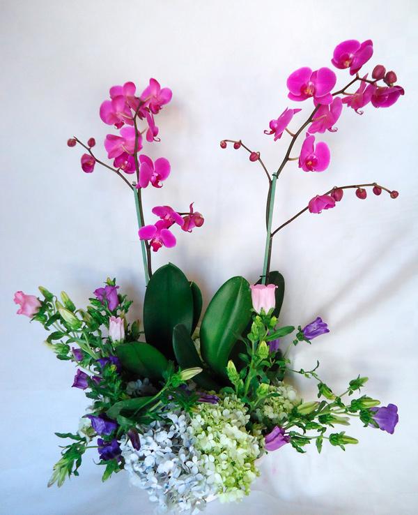 Orquidea phalaenopsis en maceta