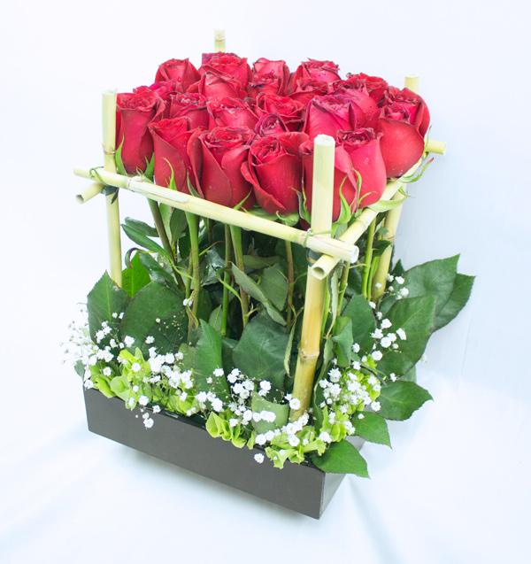 Jardin de rosas