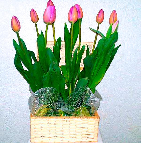 Canasta de mimbre con tulipanes