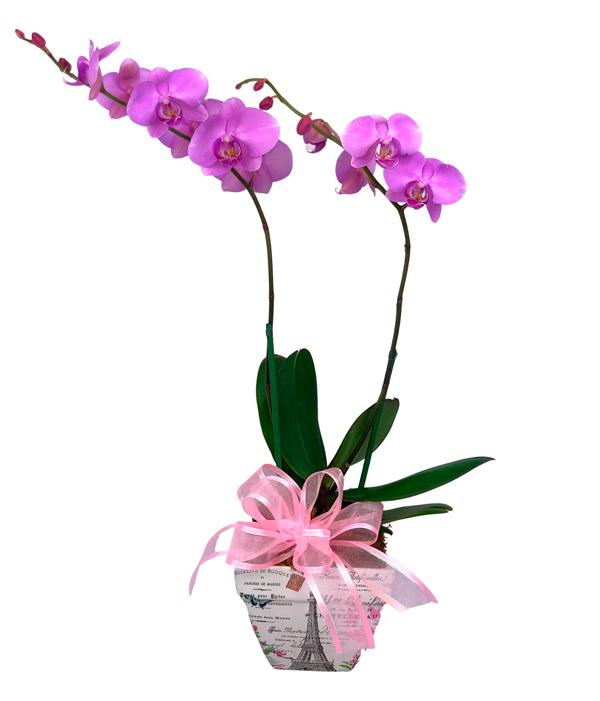 Orquídea en Base Mágica