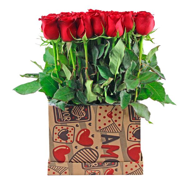 Beautiful Love + Peluche Gratis