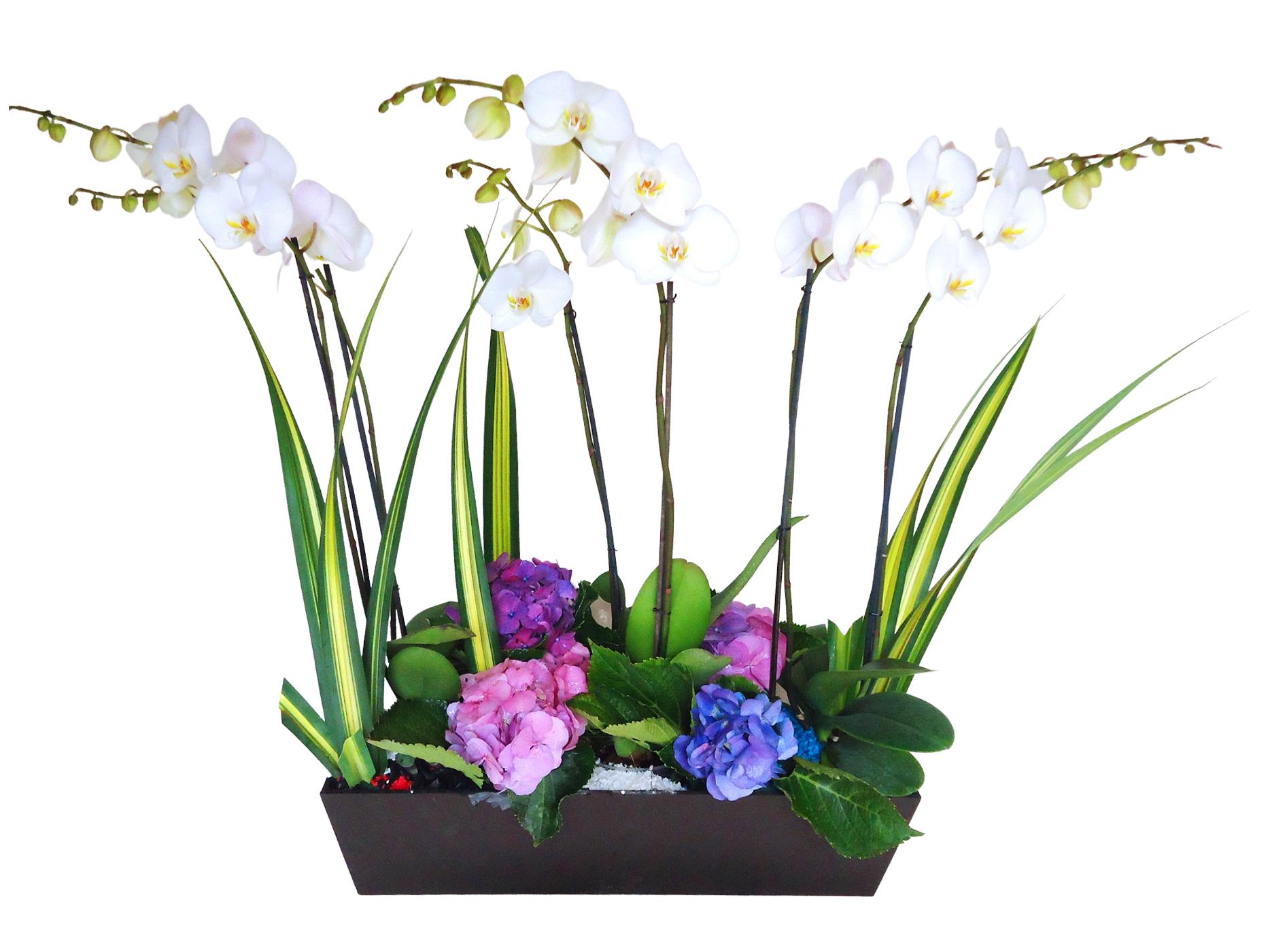 Jardinera orquidea phalaenopsis
